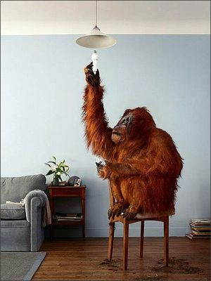 Wa-ape-changing-light-bulb